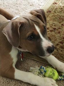 annie-puppy-first-day